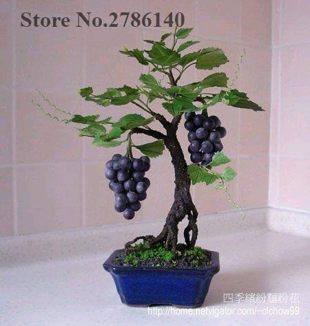 Miniature Grape Vine Seeds, PATIO SYRAH, Vitis Vinifera, Houseplant, Fruit bonsai seeds 50 pcs/bag