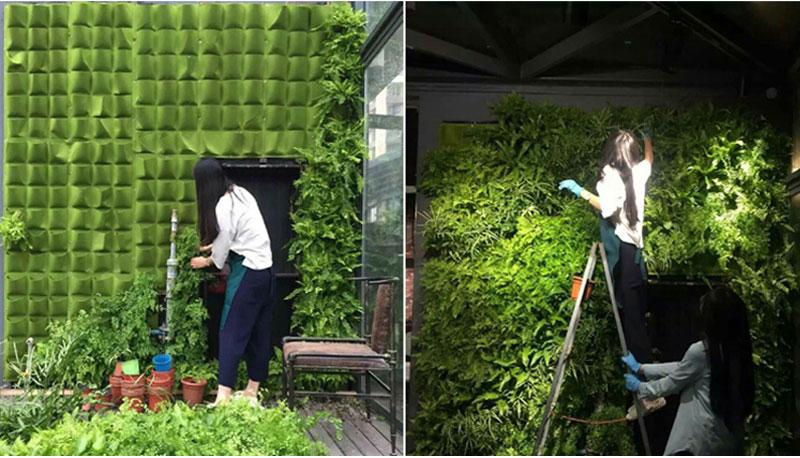 HTB1IKzSCxGYBuNjy0Fnq6x5lpXaE - Wall Hanging Planting Bags Pockets Green Grow Bag Planter