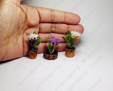 100pcs Mini Orchid bonsai flowers for rooms perennial indoor plants for home and garden potted flowers Phalaenopsis(China)
