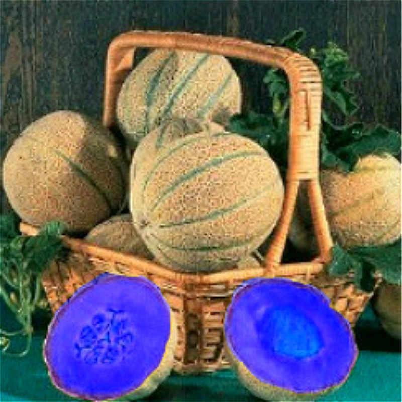 20 pz Super Grande Dolce Miele di rugiada Melone piante piante Heirloom Piante Succulente Melone Hami Melone Frutta Sementes Per giardino.