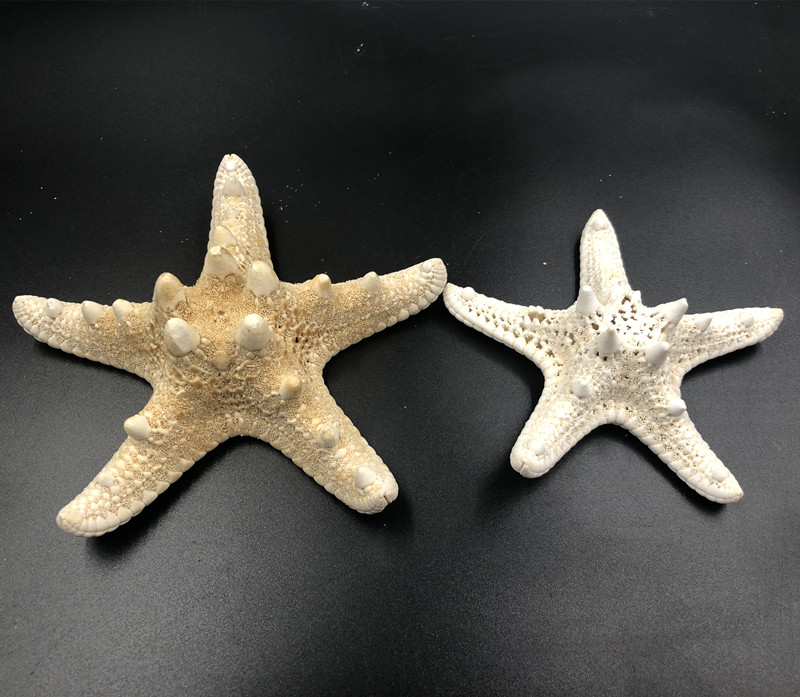 1pc Size 7.5-9cm / 10.5-11cmWhite Starfish Natural Sea Stars Five Finger Home Decoration DIY Craft Beach Cottage Wedding Decor