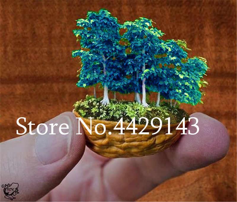 Горячая продажа 20 шт редкие японские мини клён бонсай, офисные настольные декоративные бонсай, выращивание горшочных растений, semenatsvey многолетний сад