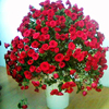 Garden Easy To Grow For Home 25 Kinds Of Flower Seeds DIY Home Garden Potted Or