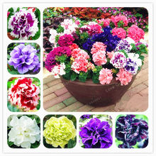100 Pcs/Bag Double Petals Petunia plant Bonsai Flower plant Short Height Garden Flowers plant Indoor Or Ourdoor Plant Pot(China)