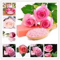 100seeds-bag-Rare-Pink-Rose-Seeds-of-Rare-Color-Aroma-DIY-Home-Garden-Plants-Crazy-Promotions.jpg_200x200