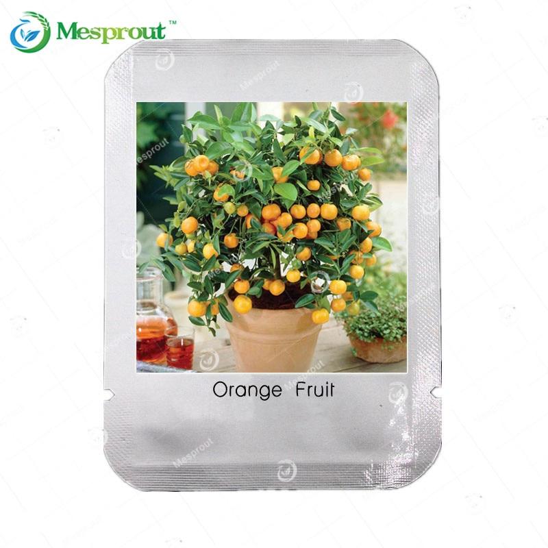 Fruit Orange Seeds Courtyard Garden Potted Fruit Tree Seeds Interesting Plants Bonsai Orange Citrus 30 PCS