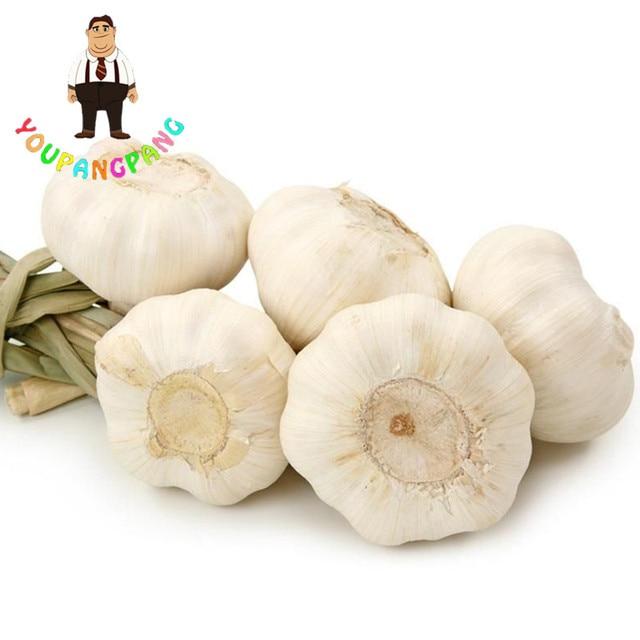 100 pz delizioso aglio bianco bonsai, verde sano verdura piante per la casa e giardino