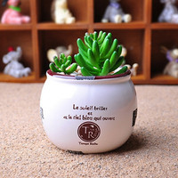 Home Furnishing Office Decoration Small Pots Of Green Plants Flower Vase
