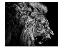 1 pieces / set HD Printed Animal Male Lion Wall Art Painting Canvas Print Room decor print poster Picture Canvas(China)