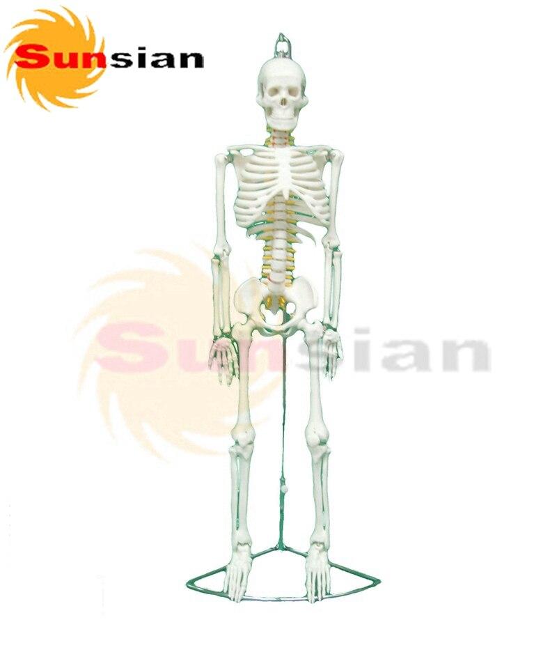 Ziemlich Nerven Des Rücken Anatomie Galerie - Anatomie und ...