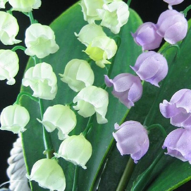 Lily of the valley flower seeds bell orchid seeds rich aroma lily of the valley flower seeds bell orchid seeds rich aroma bonsai flower seed multi colored orchids 20 seeds in bonsai from home garden on mightylinksfo