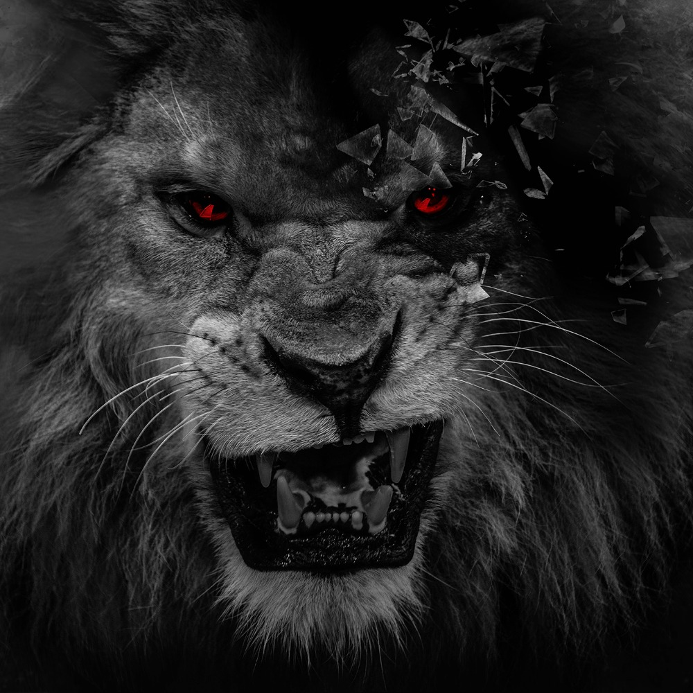 Black Lion Wallpaper