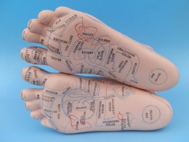 les pieds en anglais