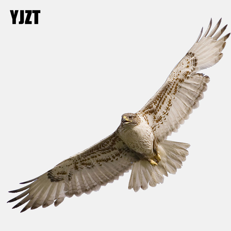 YJZT  16.6CM*6.4CM High Quality Animals Birds Eagle PVC  Car Sticker 11-01200