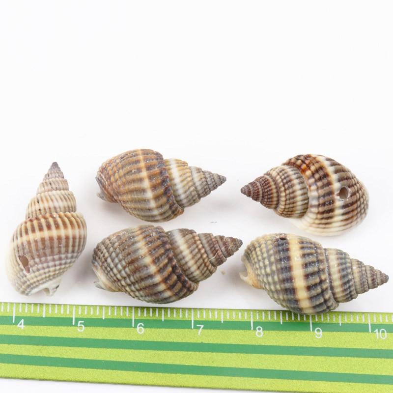 Natural Spot Spiral Shell SeaShells Zeeschelp For DIY Handmade Home Decoration Jewelry Making Scrapbooking Craft 10pcs 20-35mm