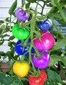 100 unids/bolsa rainbow semillas de tomate, raras semillas de tomate, vegetales orgánicos y semillas de frutas bonsai, plantas en maceta para el hogar y jardín