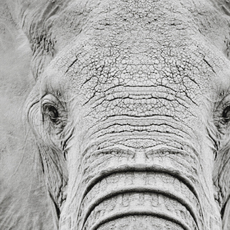 Elephant portrait posters and prints wall art canvas painting black white wall pictures for living room nordic decoration in painting calligraphy from