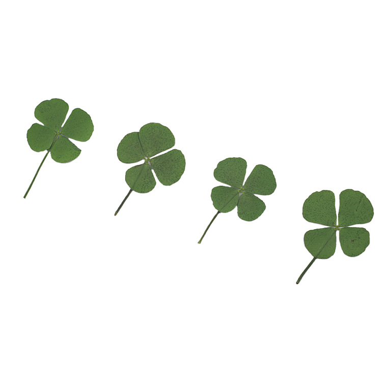 Natural Dried Lucky Combination Pressed Dry Four-Leaf Clover Leaf Plant Pendant Necklace Jewelry Production Process Diy Accessor