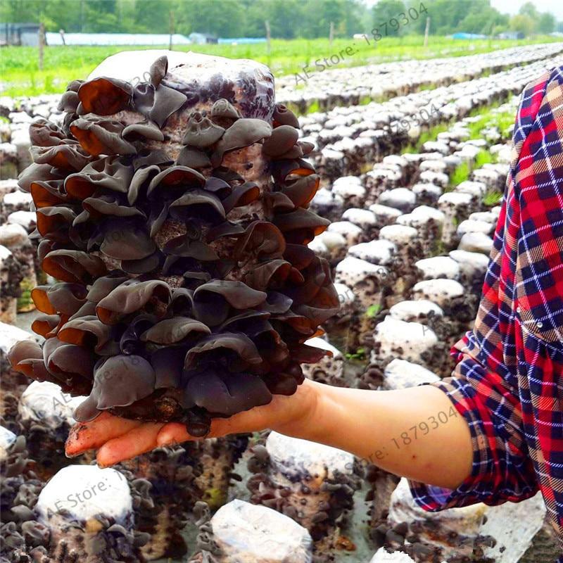 200pcs Chinese Mushroom Bonsai, Green Healthy Fungus Plant, Delicious Vegetable Garden, Rare Black Mushrooms