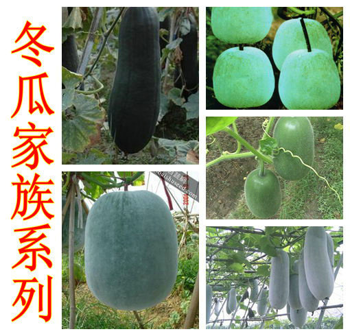 10 seeds/pack vegetables small wax gourd big white gourd fruit melon ...