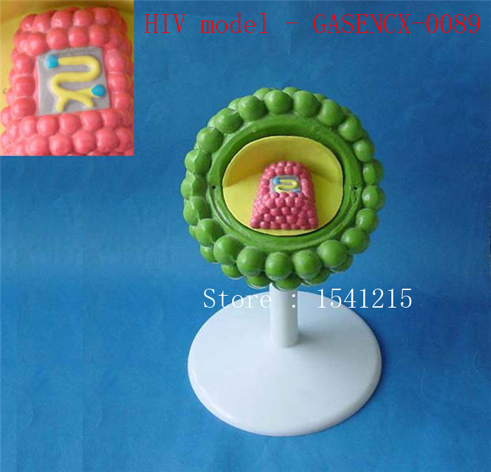 Virus structure model Biological teaching model Medical teaching aids HIV model - GASENCX-0089 42cm male 13 torso model torso anatomical model of medical biological teaching aids equipment