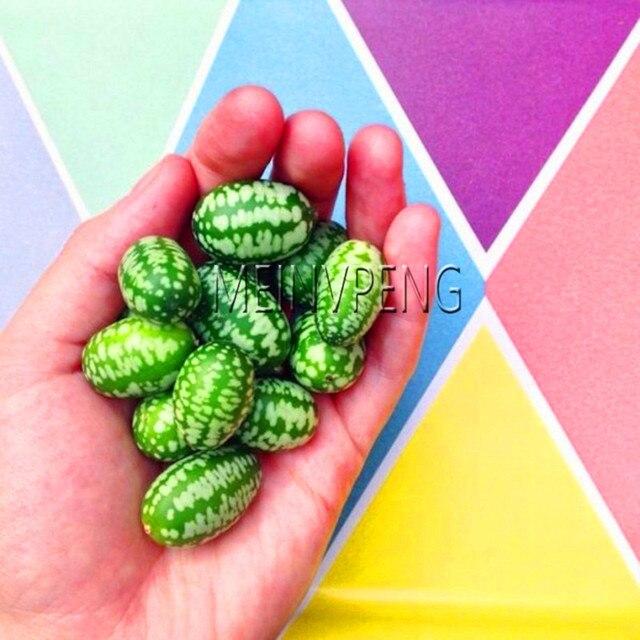 جديد وصول! الفواكه و الخضروات الإبهام البطيخ بونساي الإبهام الخيار البسيطة البطيخ Pepkino المكسيكي حمض الخيار 100 حديقة