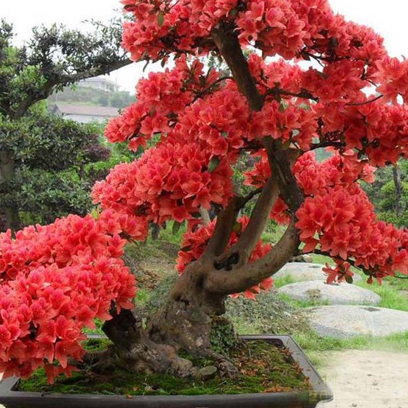 Large Red Japanese Cherry Blossom Original Modern Asian Art ...