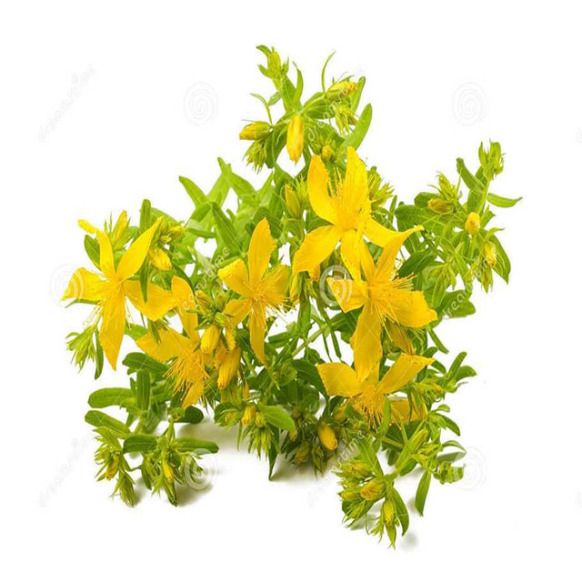 St. John's Wort Extract 30:1: 100g-1kg – Mood, Sleep (0.3% Hypericin)