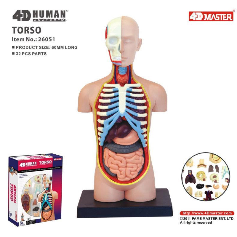 4D Viscera Intelligence Assembling Toy HumanOrgan Anatomy Model Medical Teaching DIY Popular Science Appliances