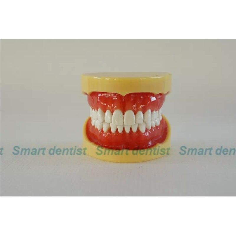 2016 KQH-H330/S5A, modèle de mâchoire dentaire standard A, dents blanches avec gomme, modèle dentaire, éducation, médecine