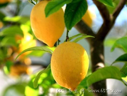 柠檬的功效 预防心血管疾病预防心血管疾病