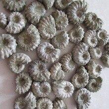 АААА+++ натуральный Рог Улитка окаменелости минеральных камня, руды Gems камень грубые руды энергии Мадагаскар 30 г-50 г