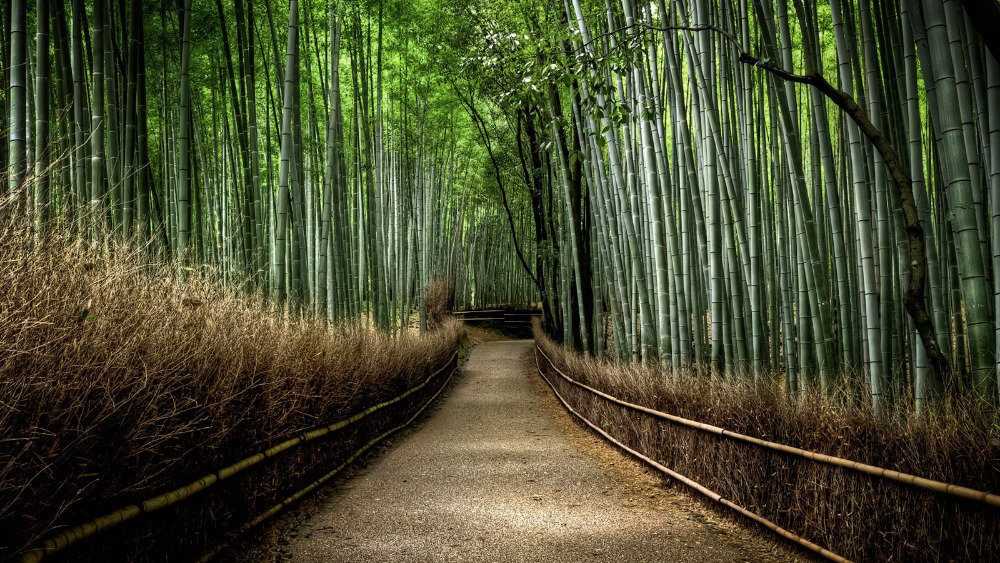 Bamboo Forest 4k Wallpaper The Galleries Of Hd Wallpaper