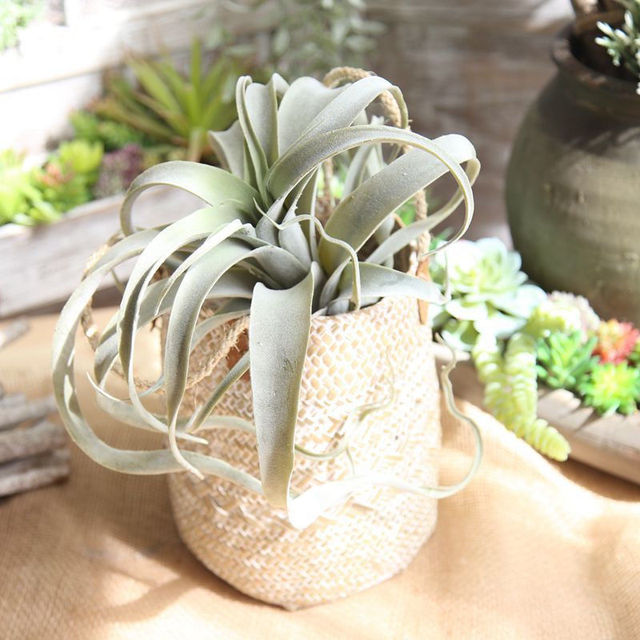 1 Branch Artificial Pineapple Leaves Fake Succulent Plant Air Plants Wedding Bouquet Supplies for Home Garden Wall Decoration