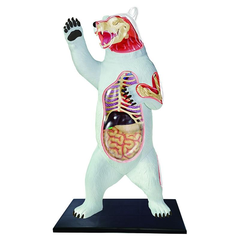 4D Polar bear Intelligence Assembling Toy Animal Organ Anatomy Model Medical Teaching DIY Popular Science Appliances