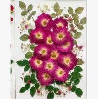 Mixed Getrocknete Gedrückt Lila Rose Blume + Blatt Pflanzen Herbarbelege Für Schmuck Anhänger Ohrringe, Die Fertigkeit DIY Zubehör