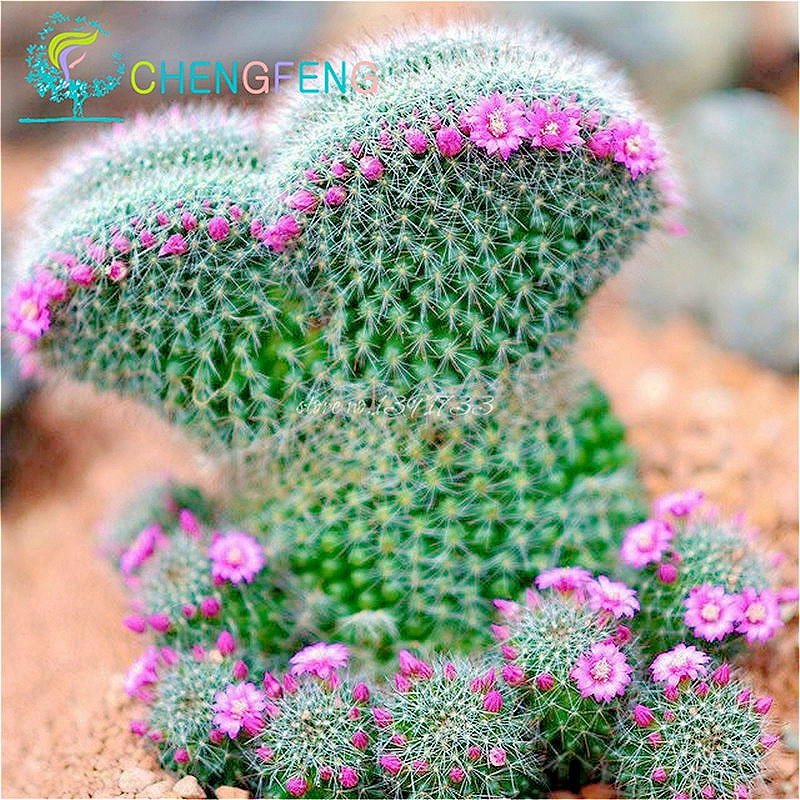 Hot Selling 100pcs Mixed Cactus Ball Seed, Succulent Cactus Seed For Home & Garden Pot Plant Home Garden Free Shipping