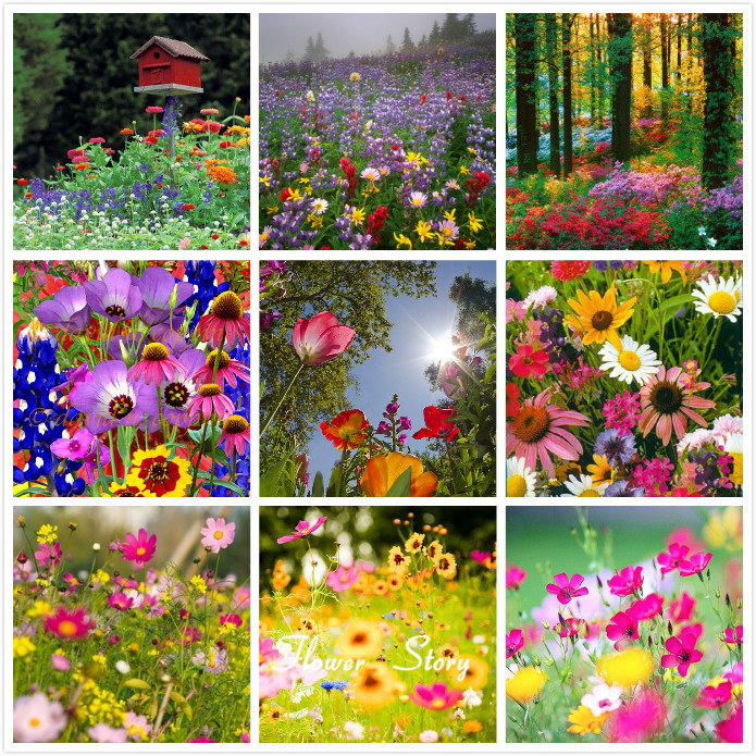 Buy 500 10000 mix fresh wildflower flower seeds free to choose beautiful diy - Garden decor stores ...