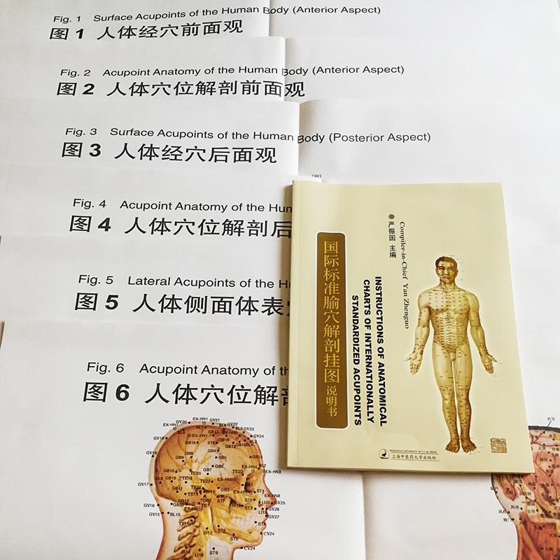 6Pcs/set Bilingual Acupoint Charts & Instructions Of Anatomical Charts Of Internationally Standardized Acupoints Book