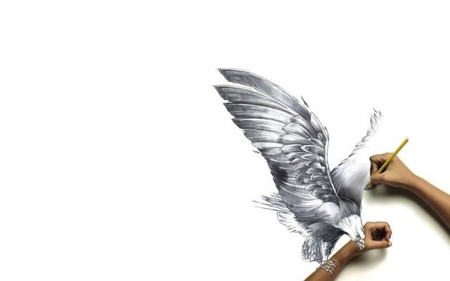 300+ Gambar Burung Pensil HD