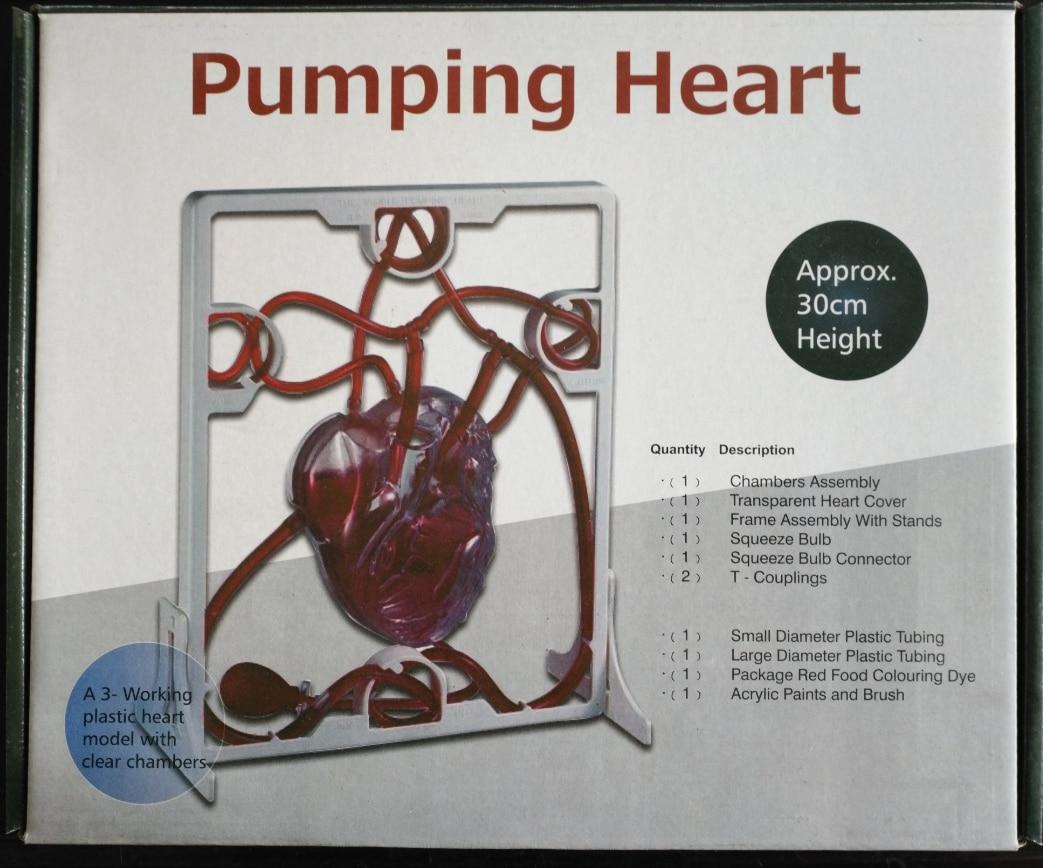 Qh 13 Heart Blood Circulation System Model Diy Pump