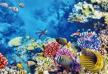 Laeacco Sea Underwater Coral Fish Baby Birthday Party Wallpaper Photography Backgrounds Photographic Backdrops For Photo Stadio