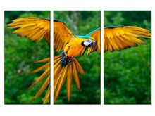 3 pieces / set Canvas Wall Art Fashion Flying Parrot Home Decorative painting Print Painting