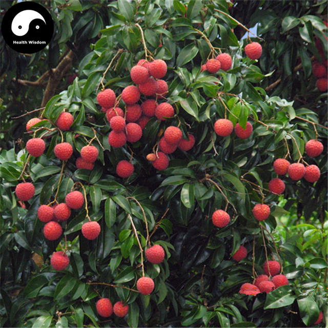 buy litchi fruit tree semente 120pcs plant litchi chinensis for lychee li zhi in bonsai from. Black Bedroom Furniture Sets. Home Design Ideas