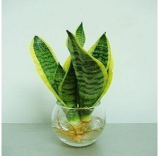 Interior resistente a la radiacin plantas hidropnicas de