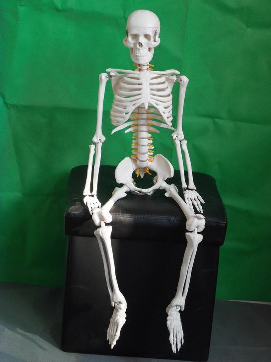 compare prices on human body skull- online shopping/buy low price, Skeleton