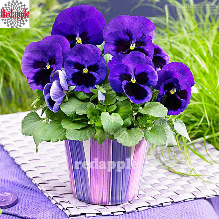 5d Diamond embroidery pouple flowers square drill cross stitch full diamond mosaic diy diamond painting Pansy pattern needlework
