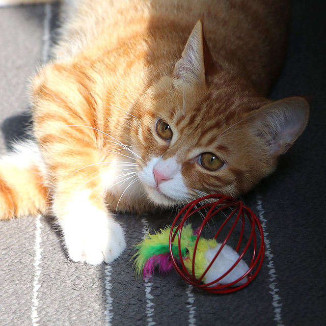 Cat Toys Interactive