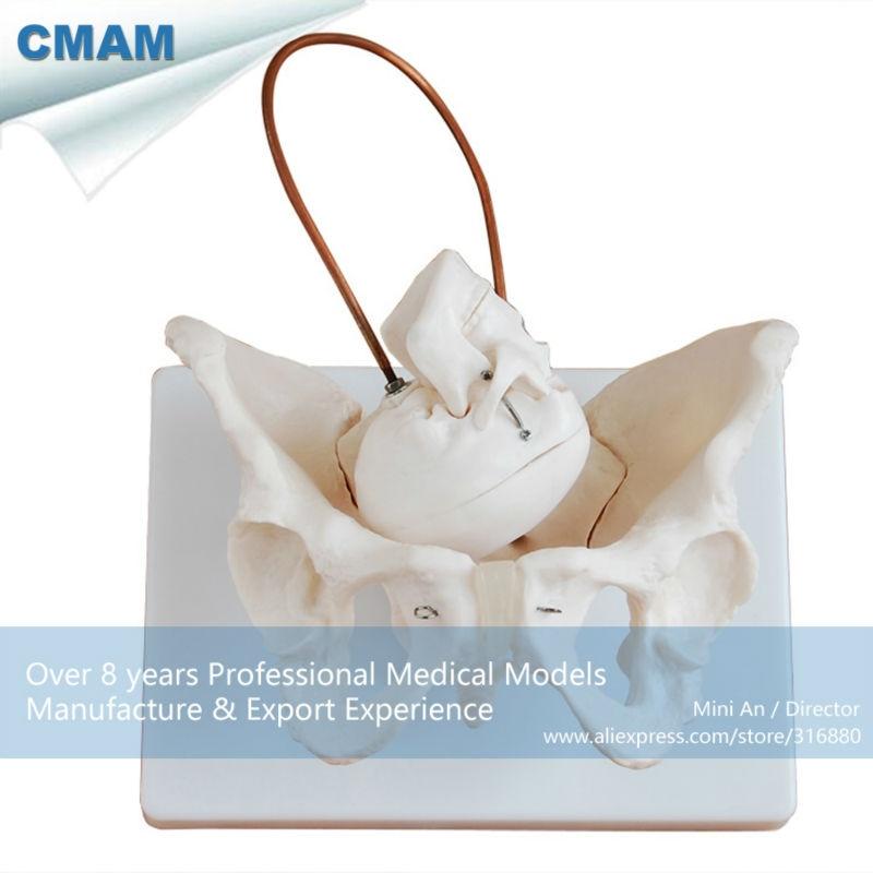 12345 CMAM-PELVIS08 родов демонстрация таза, женского таза анатомическая модель для рождения исследование ...