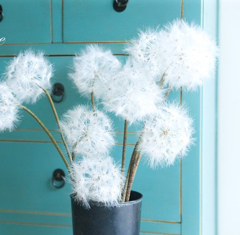 Buy take away creative gifts idea high for Dandelion flowers and gifts